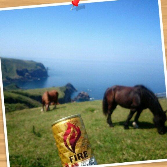 断崖で馬は草を食み、私はそれをみながらコーヒーを飲みました