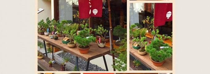 盆栽カフェ グラード
