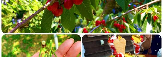 果物楽園 うばふところ