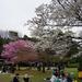 お花見とお花見弁当。|ちょりママオフィシャルブログ「ちょりまめ日和」Powered by Ameba