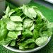 バジルソース(ジェノバソース)の料理(レシピ・作り方) ~バジルのレシピ「ジェノベーゼ」への道|バジルと大葉(青じそ)の栽培(育て方)とレシピ