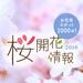 桜開花情報2016 - Yahoo! JAPAN